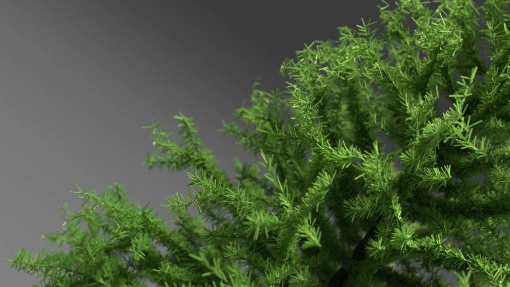 Pine Tree Free 3D Model Pines